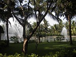 palm trees, fountain, fountains