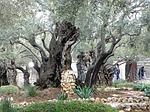 gethsemane, garden, jerusalem