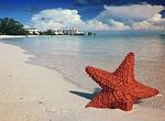 starfish, sand, bahamas