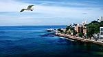 mar, ocean, seagull