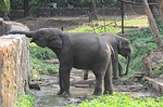 elephant, zoo, drinking water