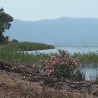 Lake Köyceğiz, turkey , beldibi