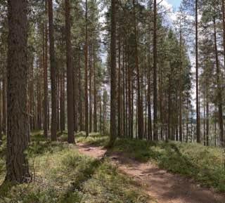 Leivonmäki National Park, finland , jyvaskyla