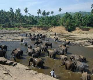Pinnawala Elephant Orphanage, srilanka , kandy
