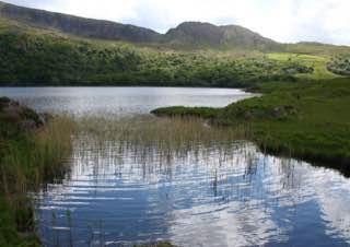 Uragh Wood, ireland , killarney