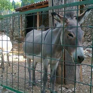 Split Science museum and Zoo, croatia , krkanationalpark