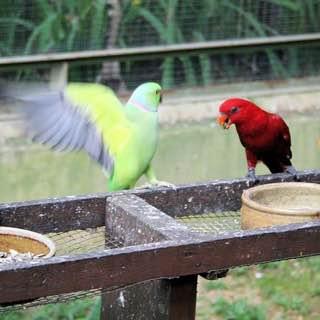 Kuala Lumpur Bird Park, malaysia , kualalumpur