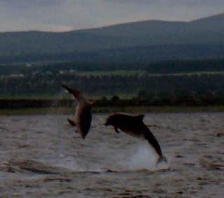 Chanonry Point, scotland , lochness
