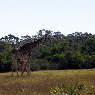 Kragga Kamma Game Park, southafrica , portelizabeth