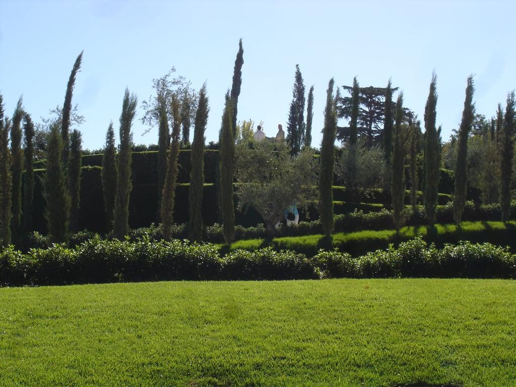 Изображение Bosque del Recuerdo. madrid park parque españa spain recuerdo bosque terrorism retiro espagne 11m olivo terrorismo ausentes ciprés
