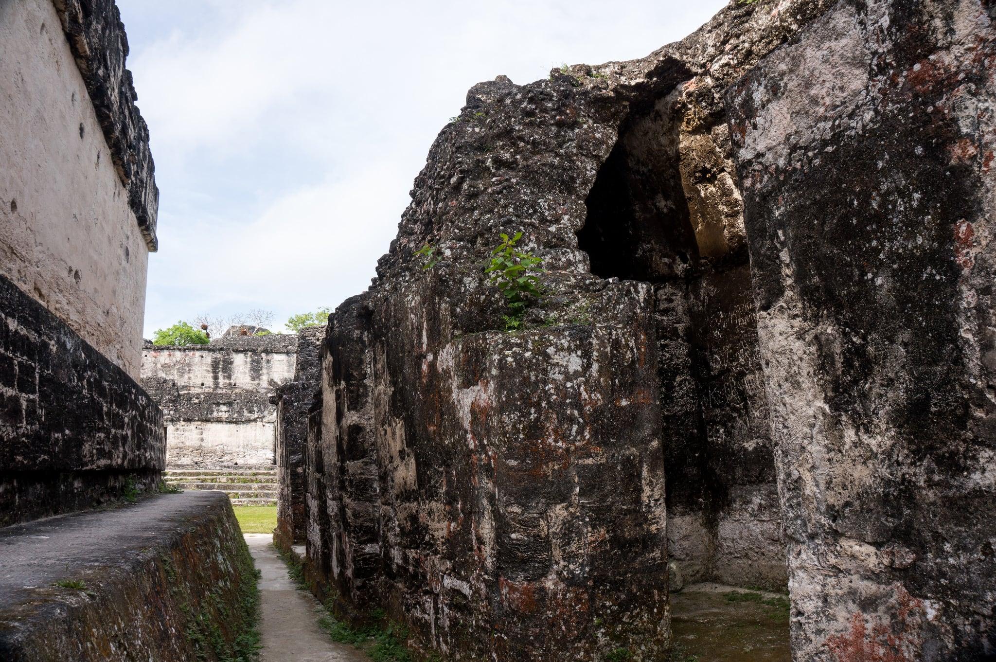 Изображение Central Acropolis вблизи Tikal. guatemala tikal petén
