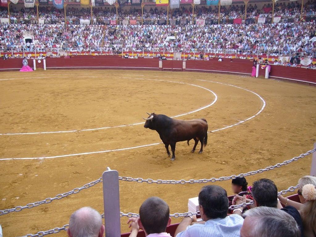 Plaza de Toros képe. fiesta feria almeria toro