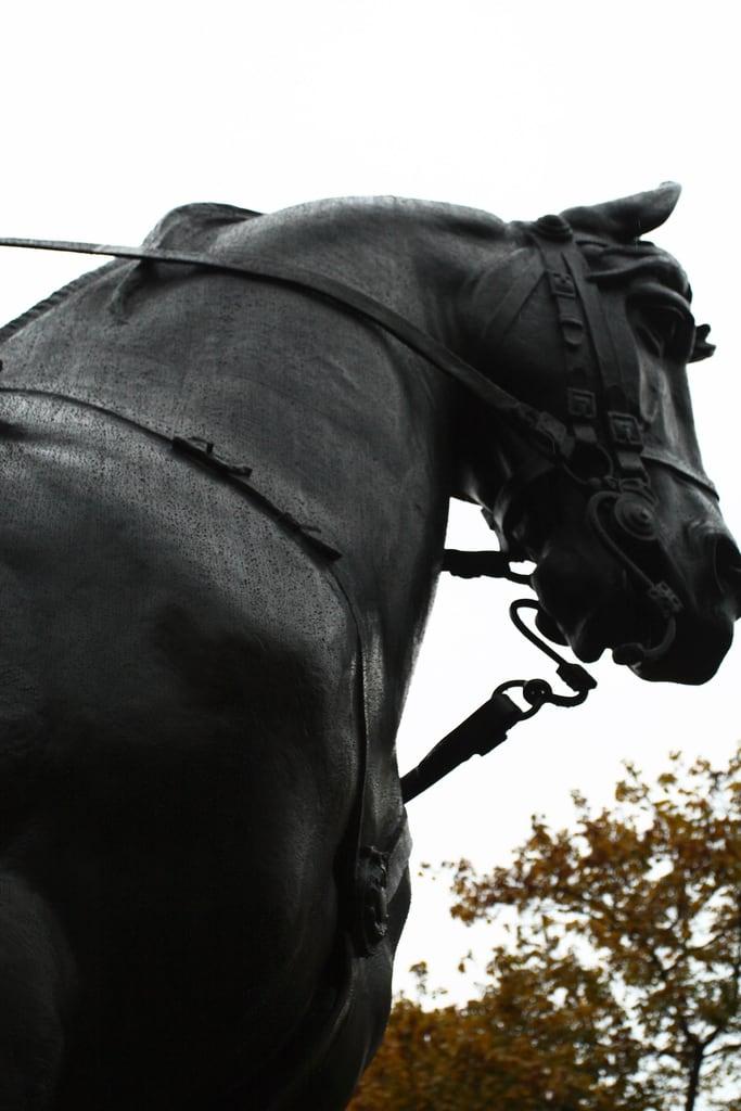 Зображення Equestrian statue of Edward VII. sculpture toronto ontario canada rain