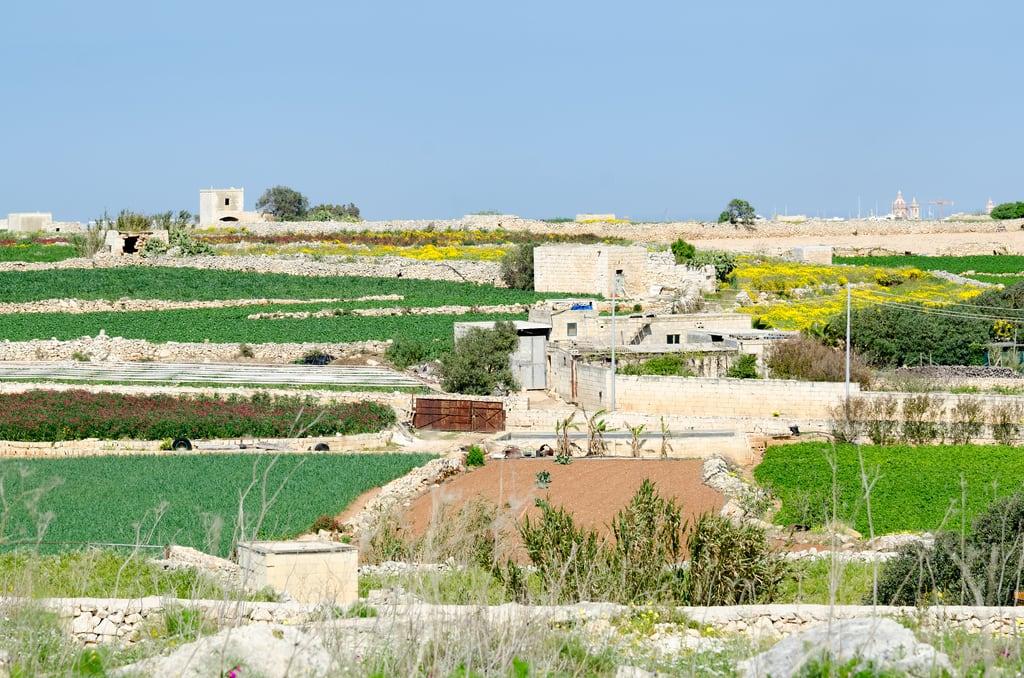 Immagine di Ħaġar Qim temples. megalithic mt malta hagarqim qrendi ilqrendi ħaġarqimtemple