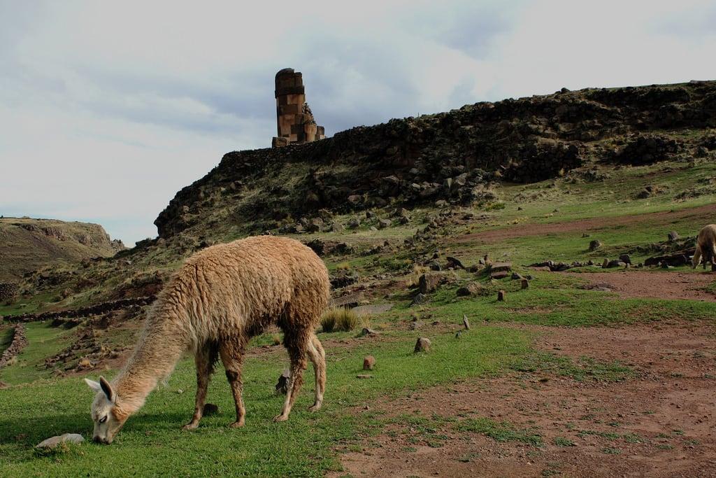 Image of Sillustani. andes alpaca sillustani chulpas highlands puno peru newyear december 2010