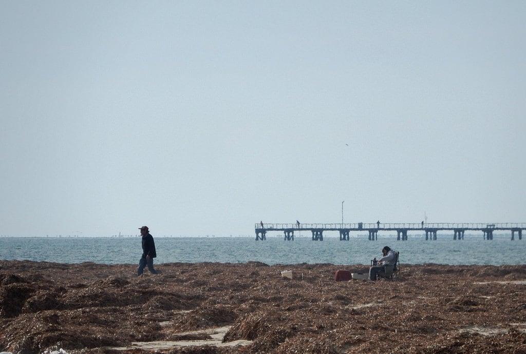 Obraz Semaphore Park Beach. semaphore beach seaweed jetty chair comfortable