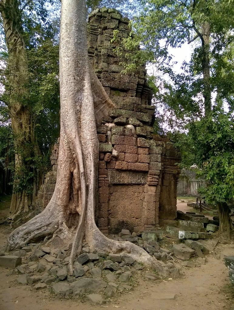 صورة Ta Prohm. ta prohm angkor cambodia siem reap tree roots stone temple carving conservation