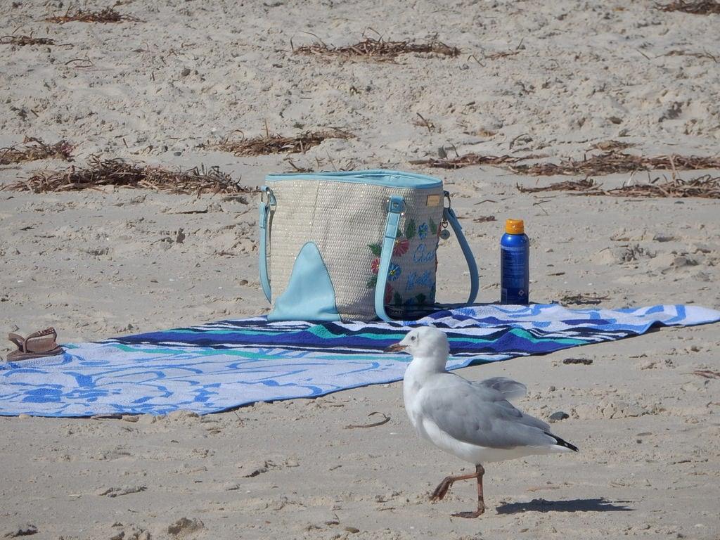 Image of Grange Beach near Grange. grange seagull towel base drink bag absent