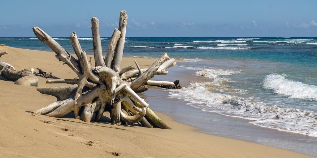 Imagem de Praia com 2559 metros de comprimento. 2018 quisqueya tree beach samaná wood sand playa ellimón caribe mar strand caribbean ocean atlantic republicadominicana coast