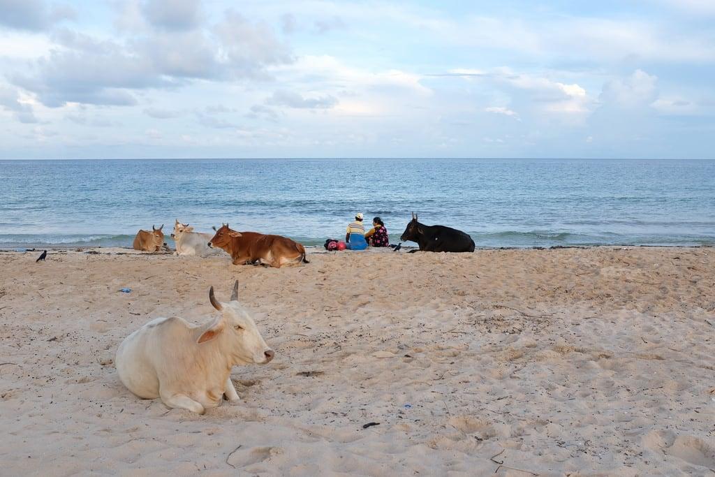 Imagine de Town Beach Plaja cu o lungime de 1153 m. トリンコマリー スリランカ lk திருகோணமலை ත්රිකුණාමළය