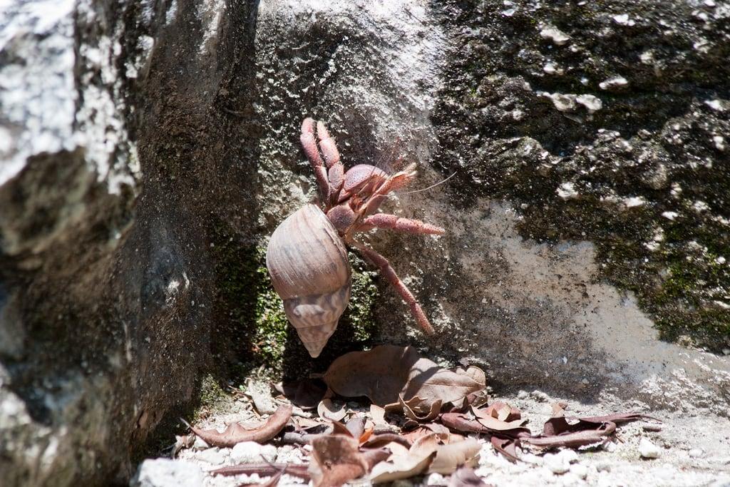 Bilde av San Gervasio. urlaub cozumel amerika tier mexiko mex krebs quintanaroo mexmexiko
