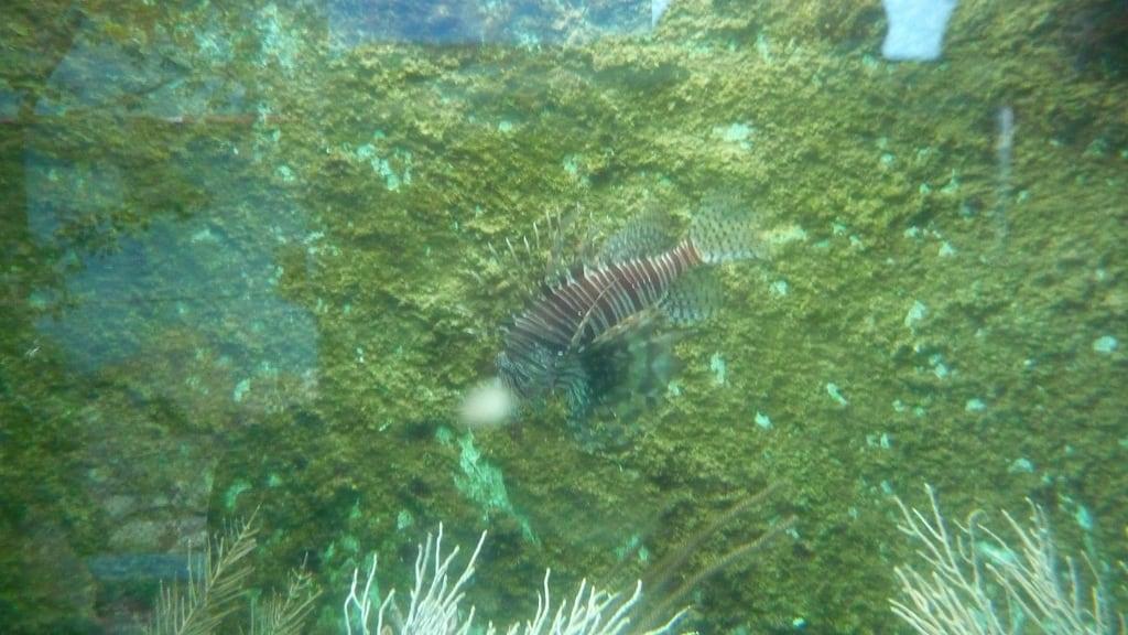 Hình ảnh của Acuario Nacional. cuba nationalaquarium nouhailler