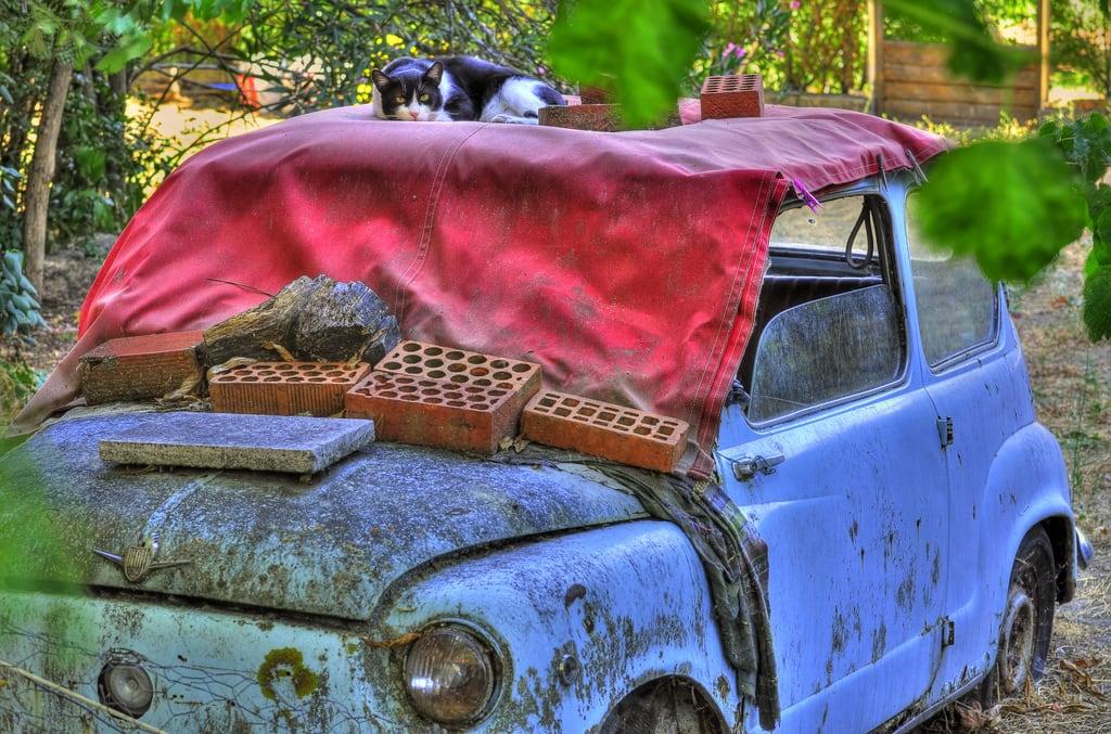 Bild av El Gato. blue red naturaleza color nature look car azul cat rojo explore gato coche mirada suspicion impassive sospecha impasible blinkagain