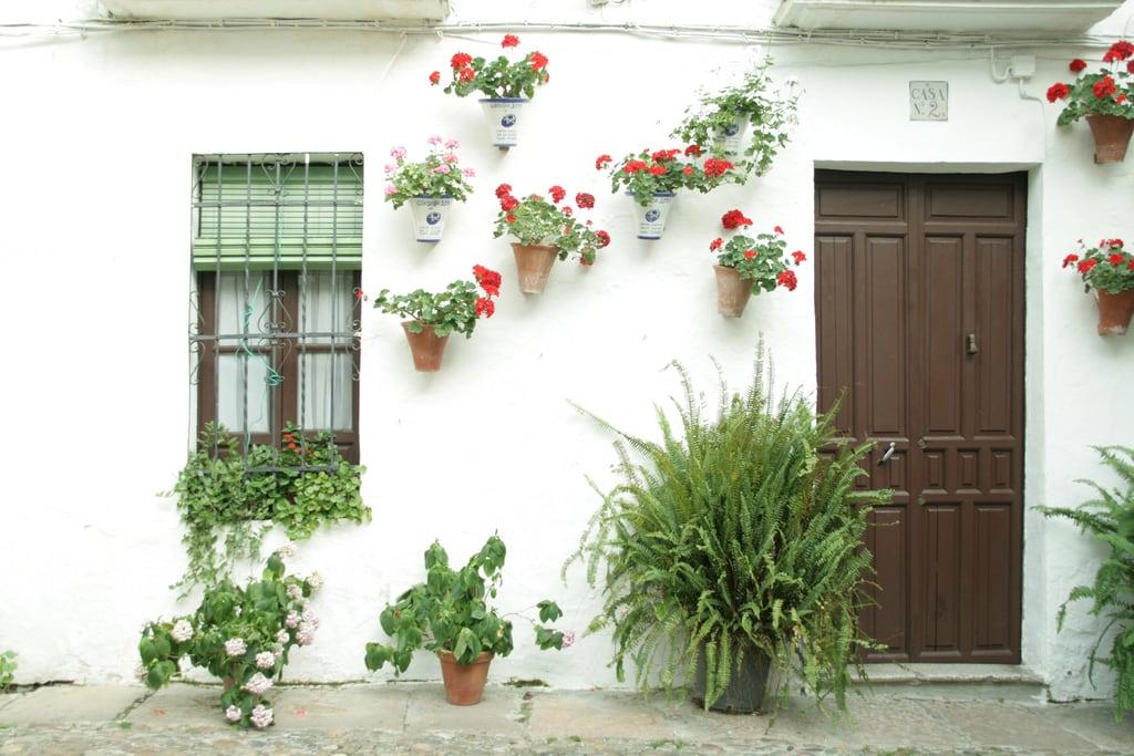 Obraz Calleja de las Flores. españa flores andalucía córdoba cascohistórico judería