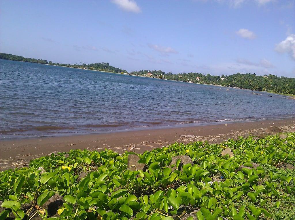 海滩 的形象. carribean jamaica