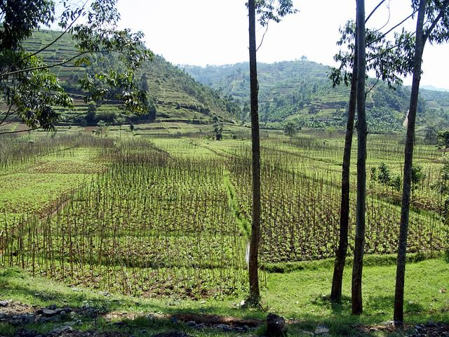 Best places to visit in Ruanda