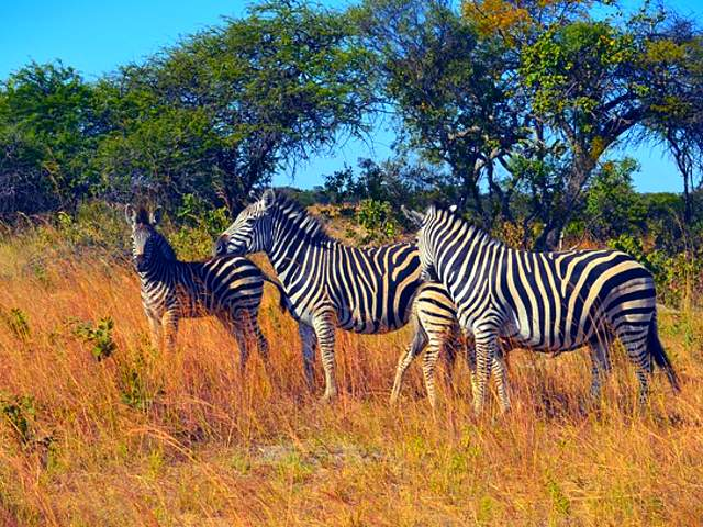 Best places to visit in Zimbabve